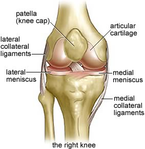 Knee anatomy is cool right?